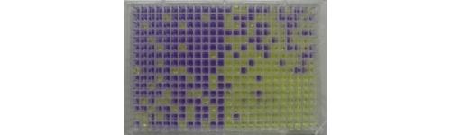 Ames MPF E.coli WP2 uvrA